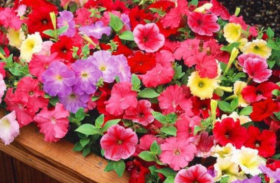5 цветов, которые пора сеять на рассаду в феврале